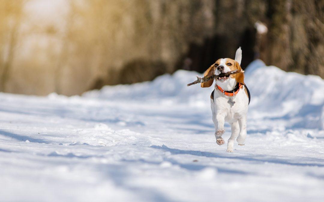 Pfoten im Winter richtig schützen!