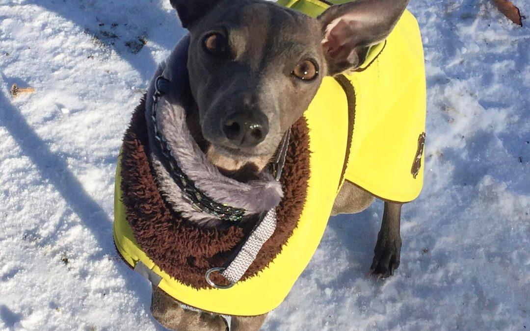Wie kommt der Hund fit durch den Winter?