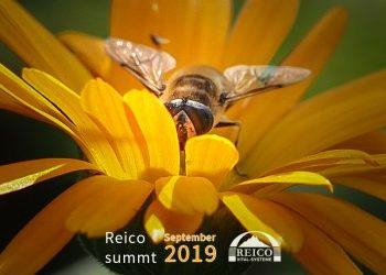 Reico summt – Wir sind Bienen Partner